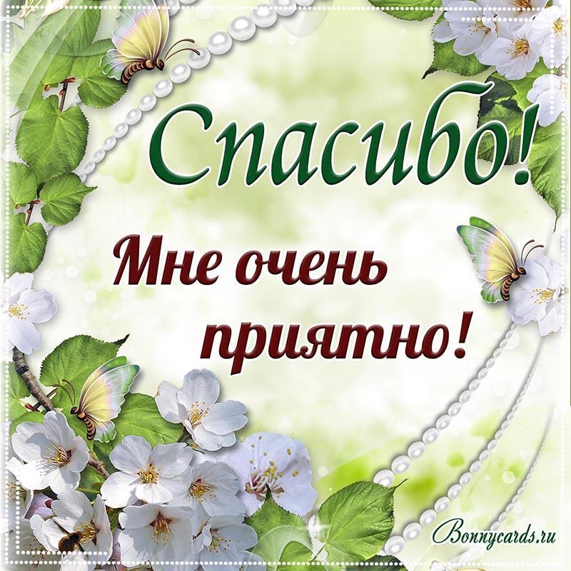 Спасибі велике картинки / фото bonnycards.ru