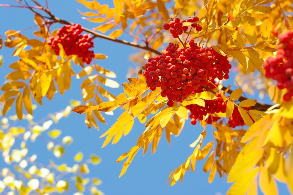 Народні прикмети на сьогодні / фото ua.depositphotos.com