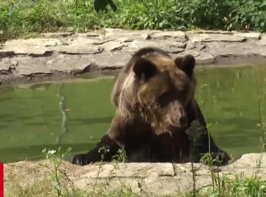 Животное жило в неволе 17 лет \ скриншот с видео