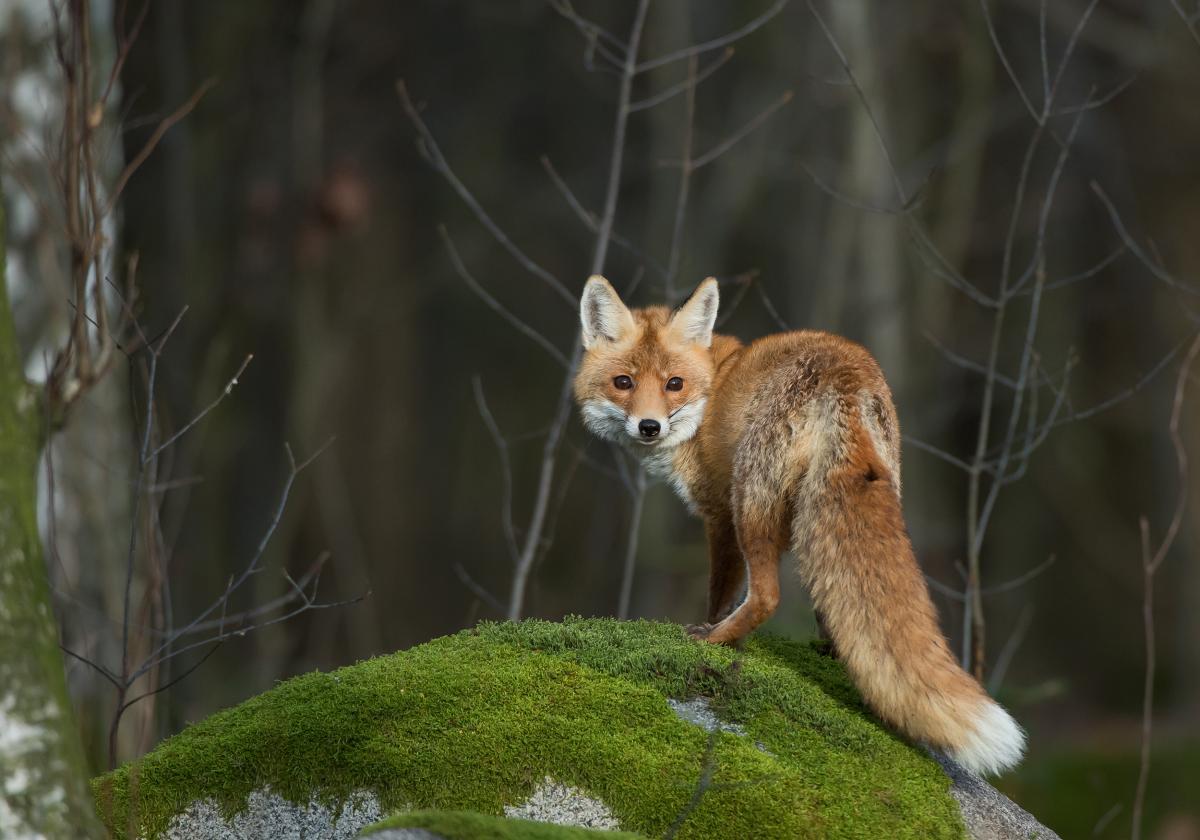 Вакцину разбросают над территориями, где живут дикие животные, а не над населенными пунктами / фото ua.depositphotos.com