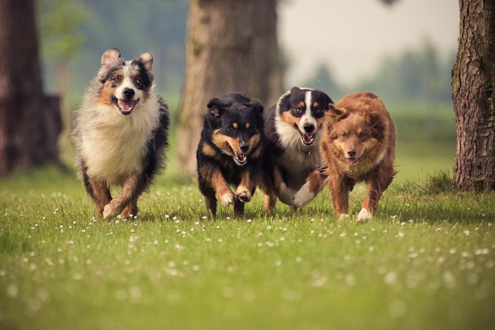 Породы собак по знаку зодиака / фото ua.depositphotos.com