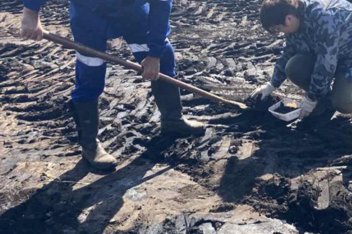В Сумской области нефть залила поле, на котором росла кукуруза / фото deisumy.gov.ua
