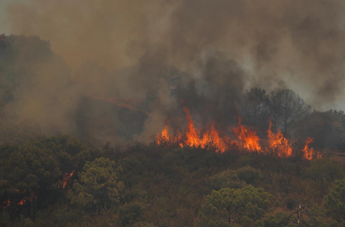 В Испании вспыхнул новый лесной пожар / фото REUTERS