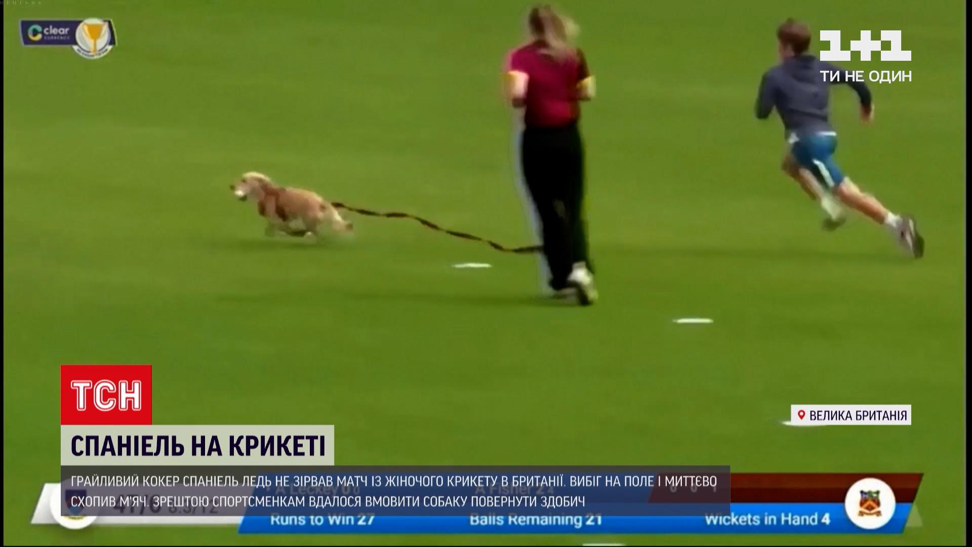 Зрештою собаку вмовили повернути здобич/ скріншот з відео