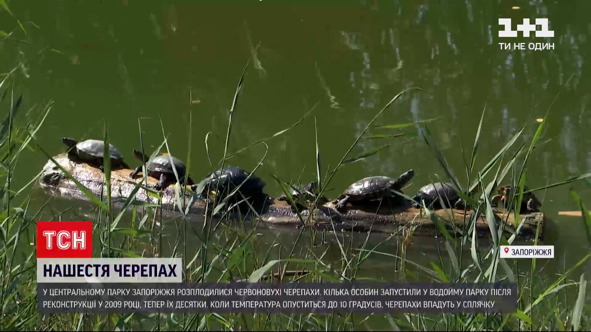 В парке Запорожья состоялось нашествие черепах