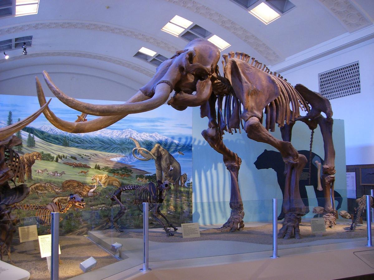 Вчені відтворять популяцію шерстистих мамонтів / фото Aaron Gustafson/Flickr