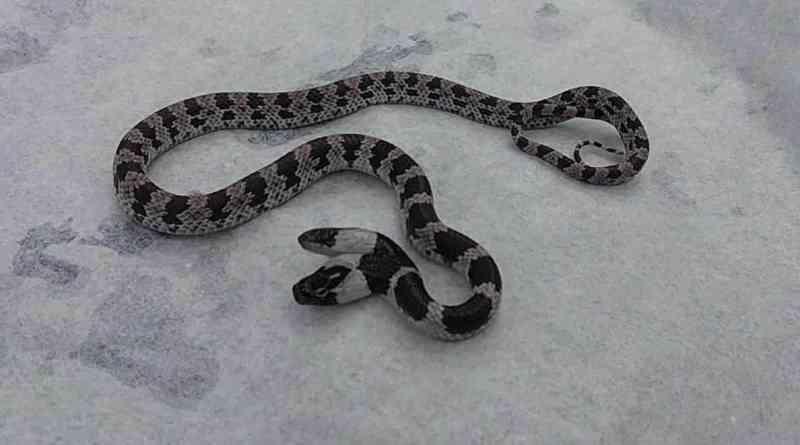 Тайванські школярі знайшли двоголову змію / фото taiwanenglishnews.com