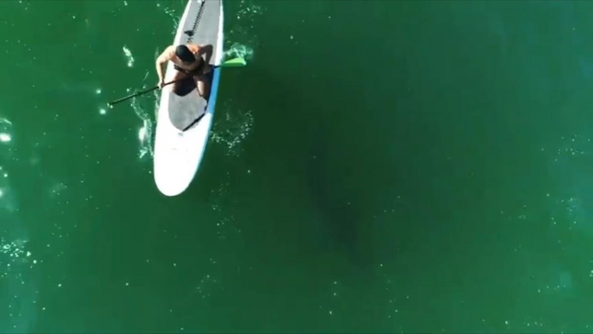 Орландо Блум плавав з акулою / скріншот