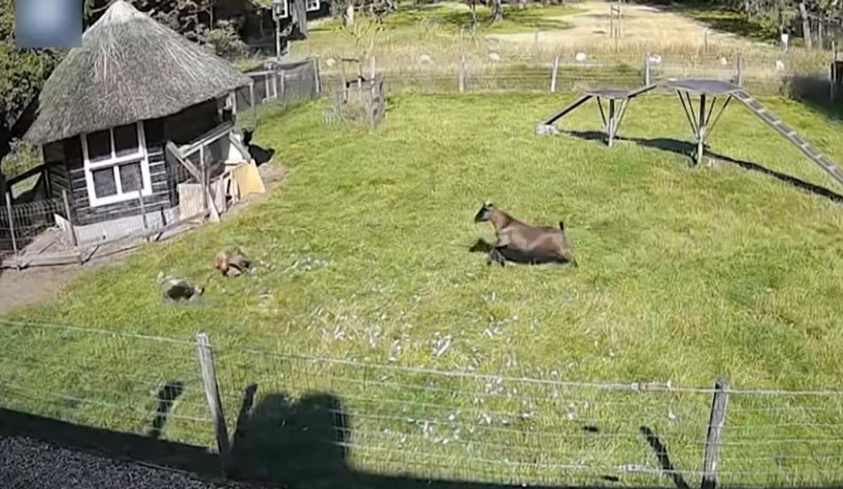 Дворовые друзья пришли на помощь курице/ скриншот из видео