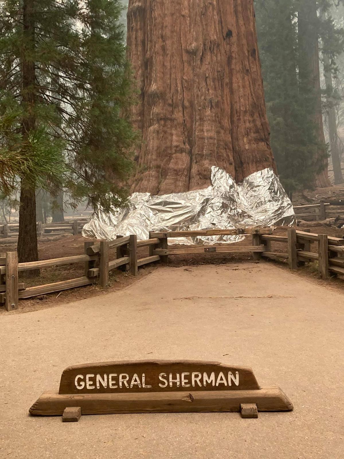Секвойю Генерал Шерман спасают от пожара / фото facebook.com/SequoiaKingsNPS