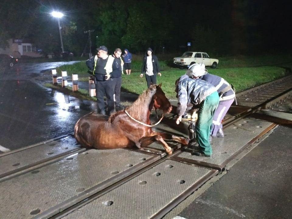 Кінь застряг прямо на переїзді \ ДСНС України