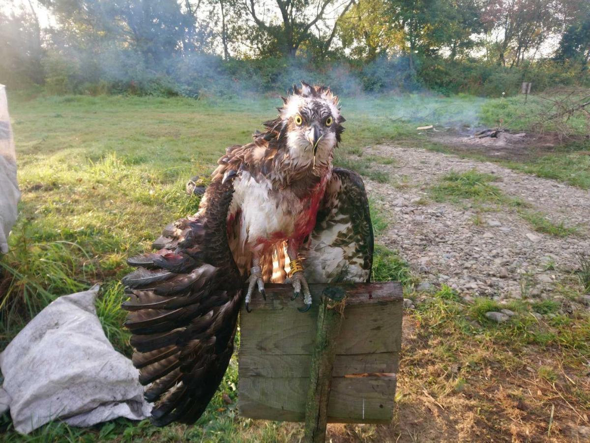 Птах не вижив / фото Facebook/Володимир Бучко