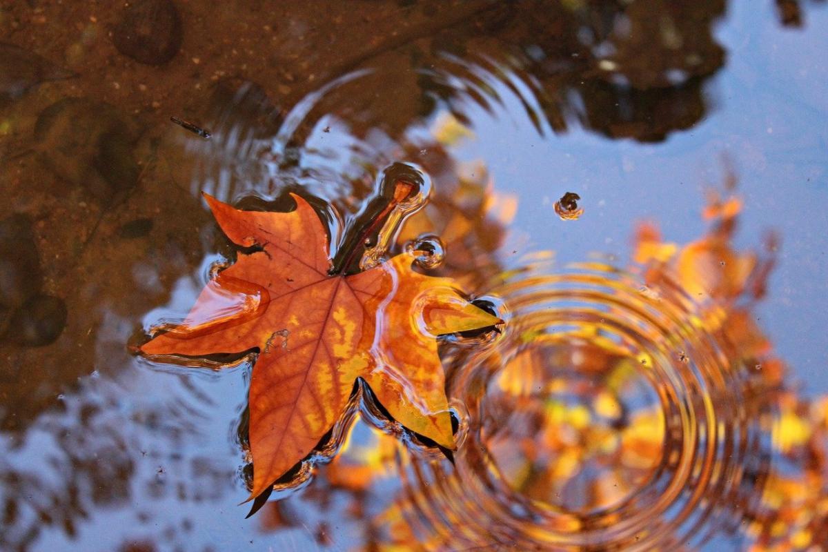 Ближайшая неделя в Украине будет дождливой и прохладной / фото pixabay.com