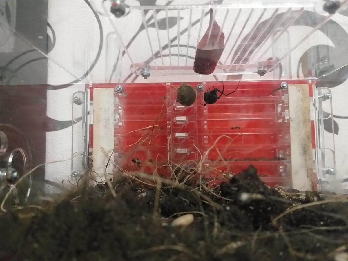 Украинец посадил найденного на улице паука в клетку / фото facebook.com/profile.php?id=100017321262167