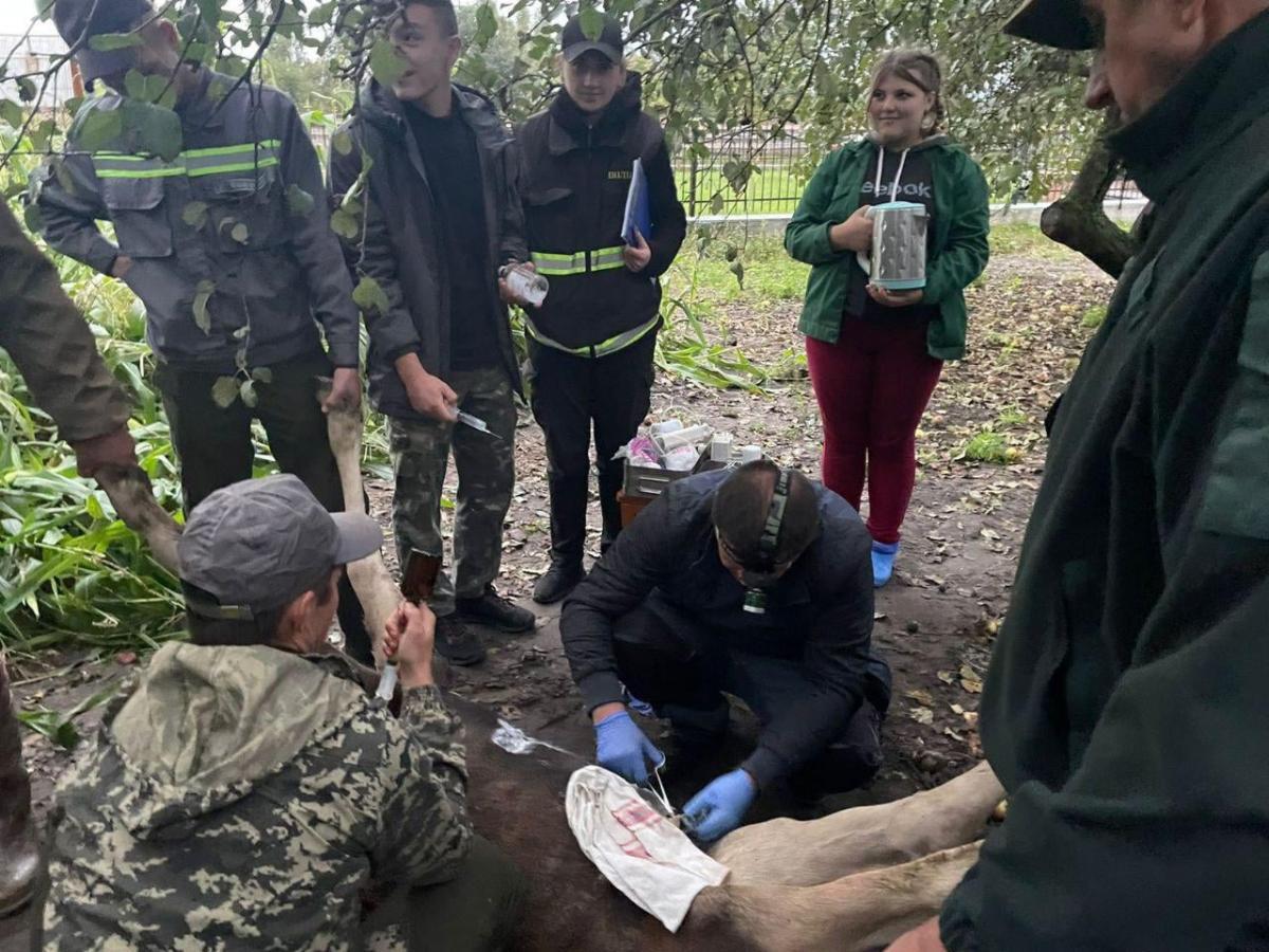 Ветеринар на месте оперировал животное / фото facebook.com/policevolyn