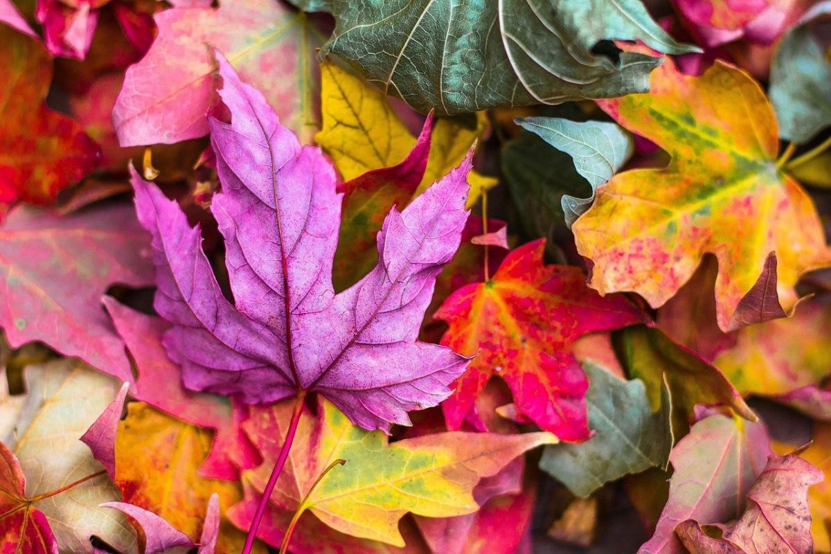 14 жовтня народне свято / фото pixabay.com