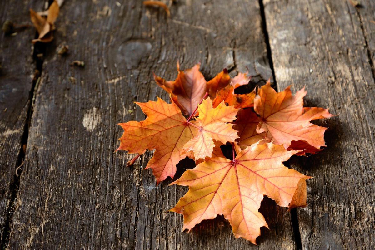 Приметы погоды 25 сентября / фото pixabay.com