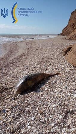 На азовском побережье нашли трупы дельфинов / фото facebook.com/AzovFishPatrol