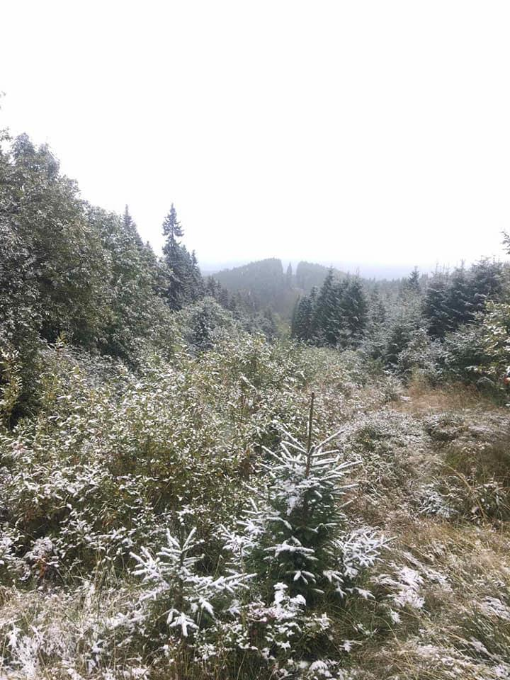 Перший сніг у Чернівецькій області / фото Міка Слусаряк, Facebook