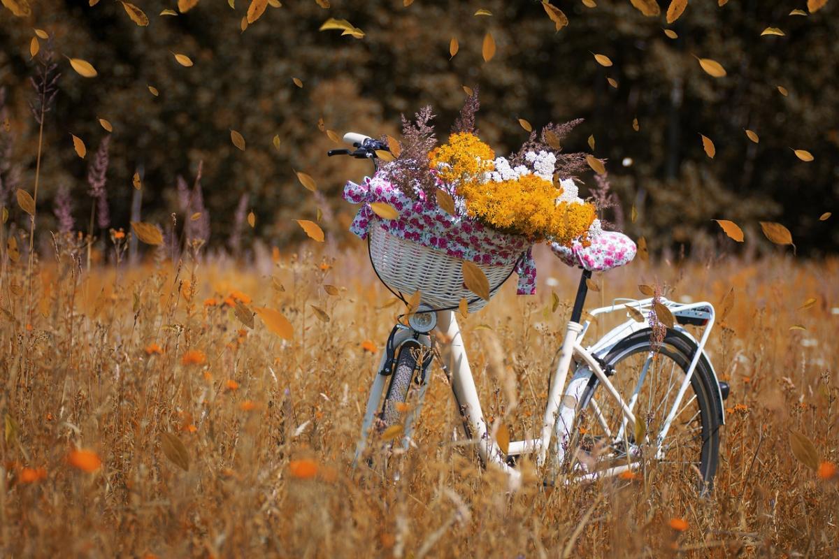 """В октябре в Украине может быть еще одно """"бабье"""" лето / фото pixabay.com"""