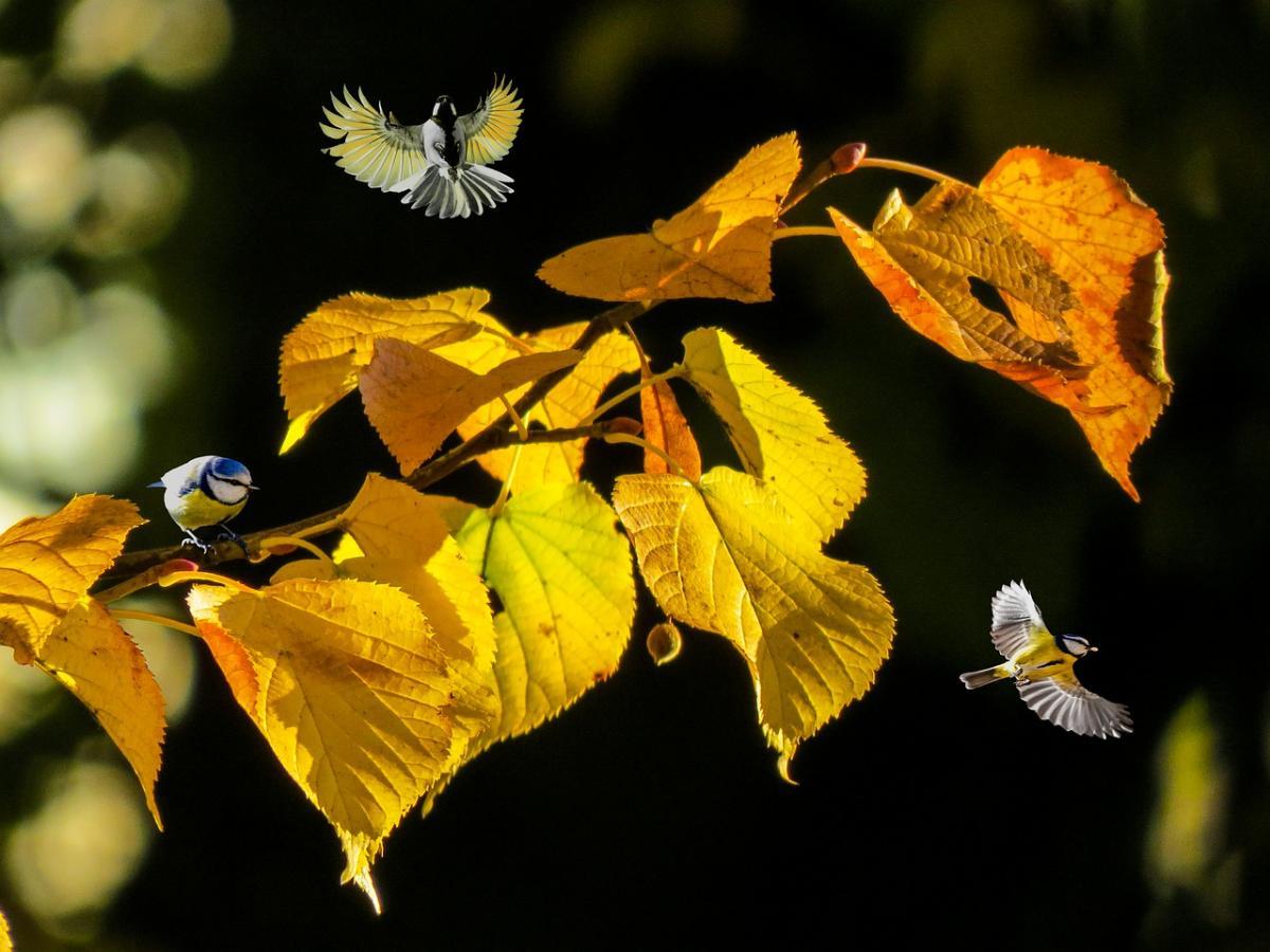 Яке свято 6 жовтня / фото pixabay.com