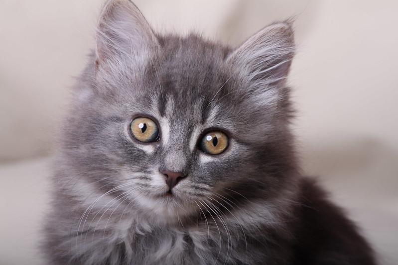 """В РФ с помощью экскаватора спасли кота, который попал в """"ловушку"""" / иллюстративное фотоflickr.com/dtmeasy"""
