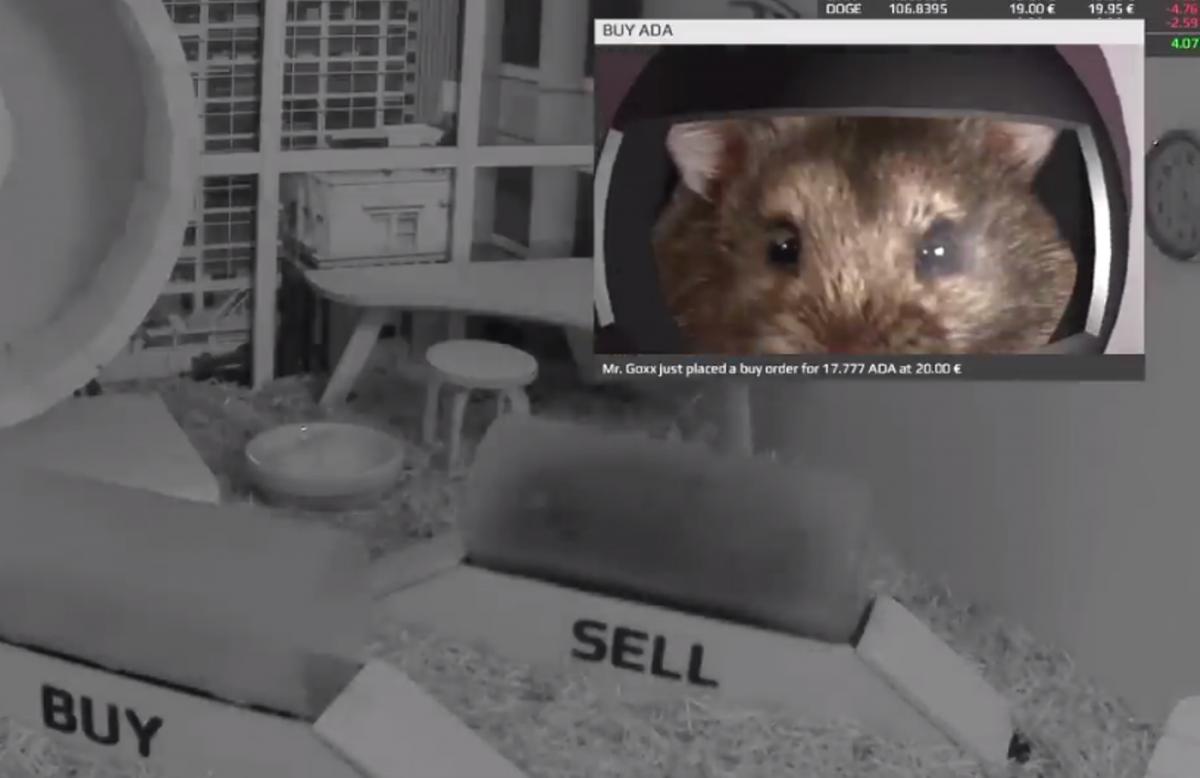 Хомяк продает криптовалюту в специально оборудованной клетке / скриншот
