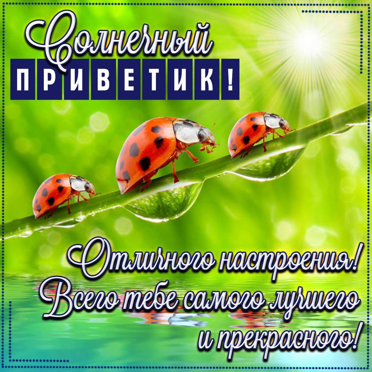 Прикольные открытки привет / фото fresh-cards.ru