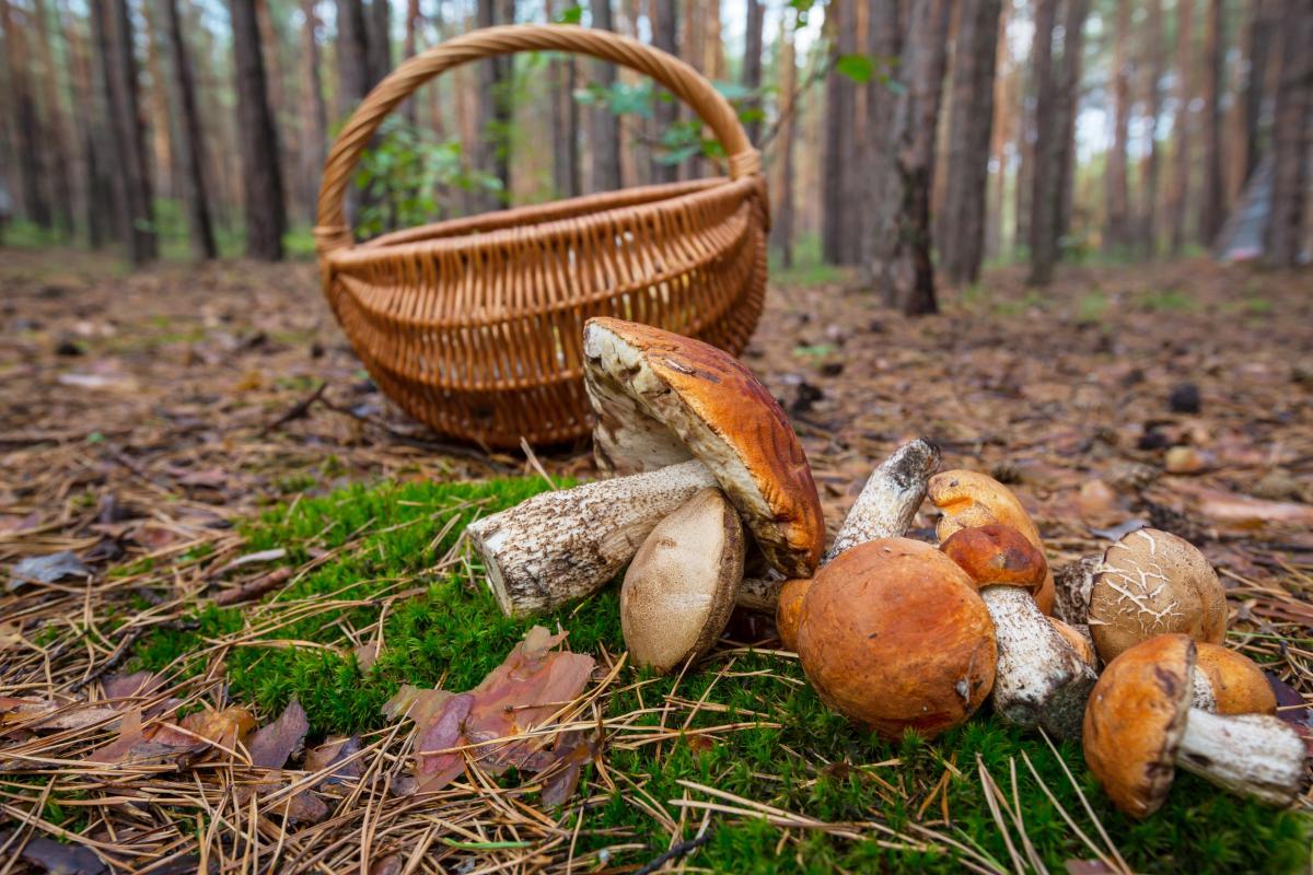 Останнім часом почастішали випадки, коли грибники знаходять у лісах вибухонебезпечні предмети / фото ua.depositphotos.com
