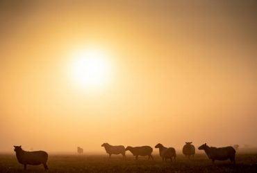 Чем туристов привлекает датский остров Зеландия (фоторепортаж)