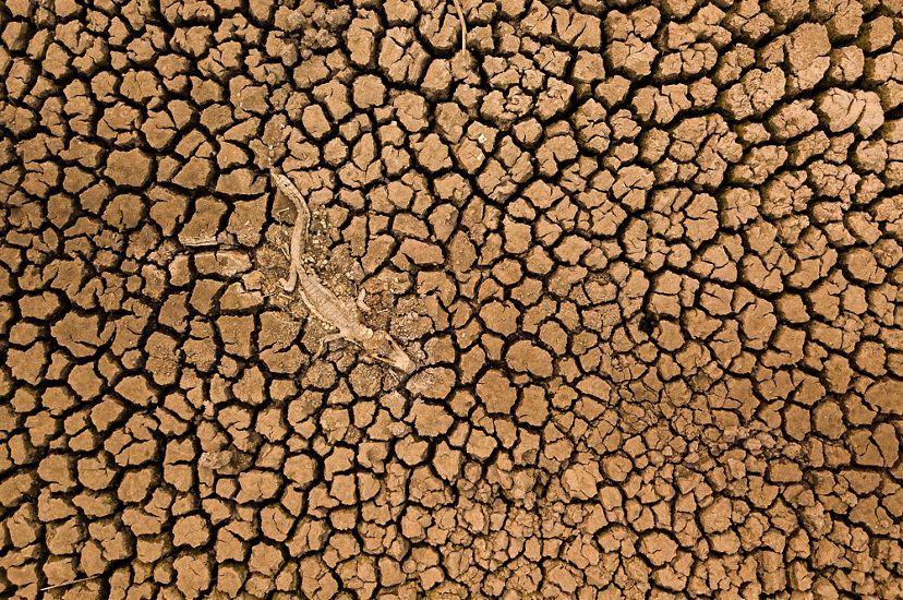 Снимок засухи, сделанный фотографом из Бразилии / фото @danieldegranville