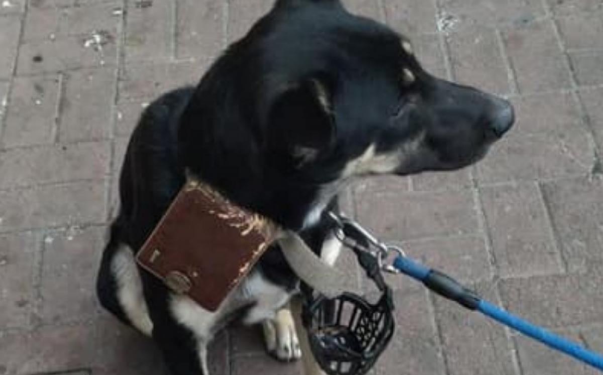 У Запоріжжі залишили собаку / фото zabor.zp.ua