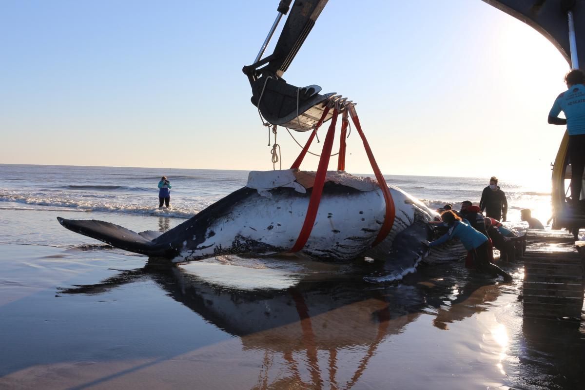 В Аргентине спасли двух китов / фото REUTERS