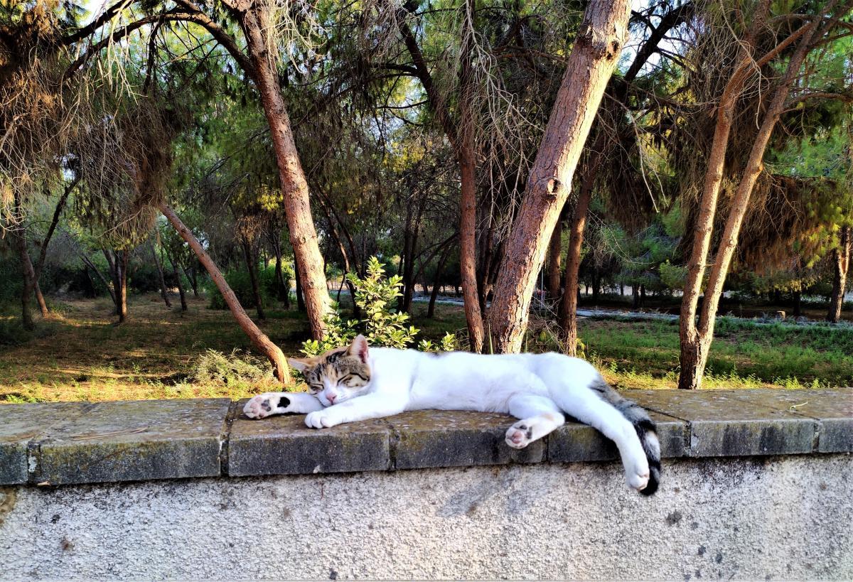 Котики на Кіпрі – справжні господарі життя / фото Марина Григоренко
