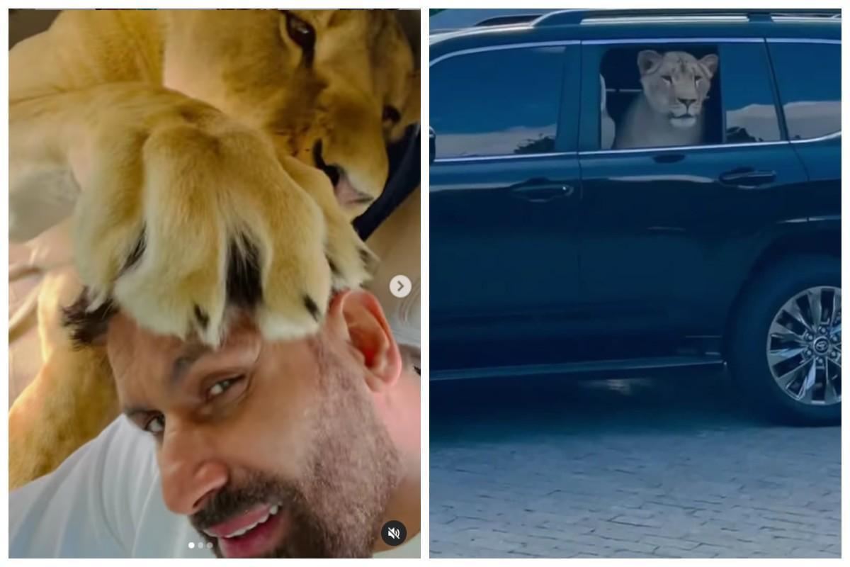 """Льва зовут """"Красавчиком"""", ему уже 4,5 года / скриншоты с видео"""