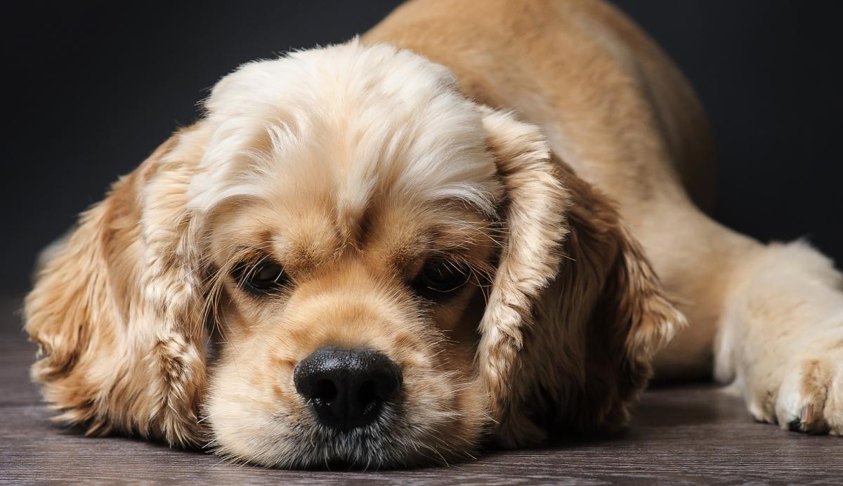 Ветеринарам удалось извлечь нож из спины собаки и зашить рану под наркозом / фото ua.depositphotos.com