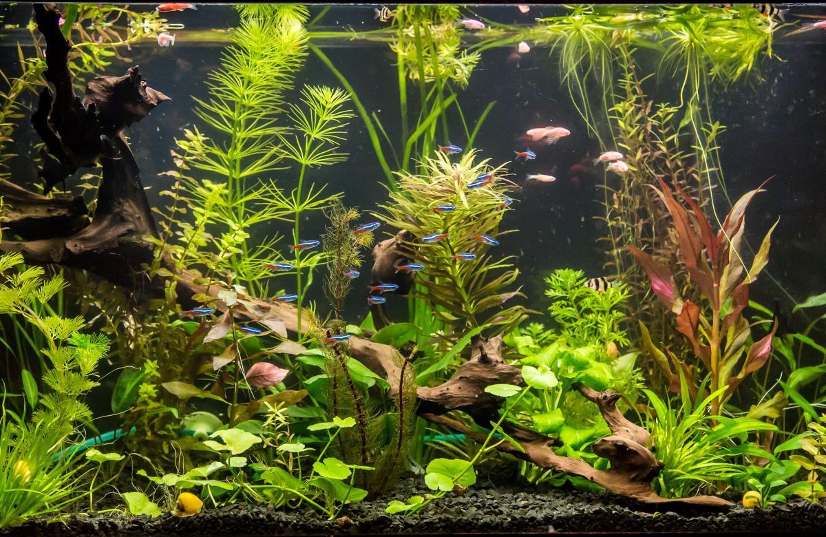 Науковці вважають, що жінка могла заразитися меліоїдозом під час чистки акваріума / фото ua.depositphotos.com