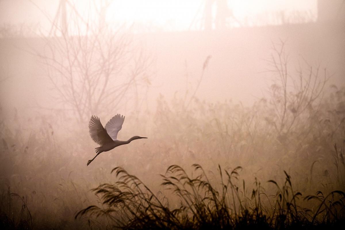 13 жовтня в деяких областях України буде густий туман / фото pixabay.com