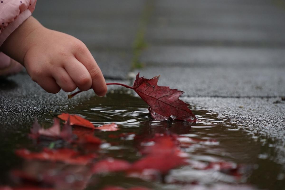 15 октября в некоторых областях Украины пройдут дожди / фото pixabay.com
