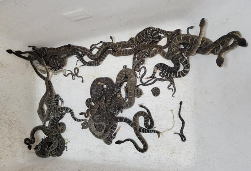 Фото Sonoma County Reptile Rescue