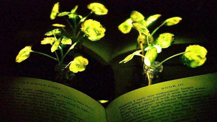Ученые научили растения светиться / фото mit.edu