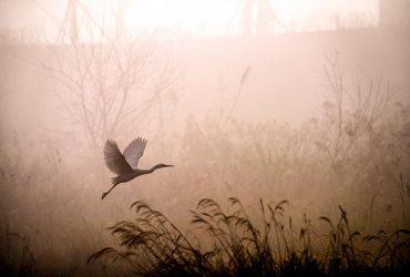Украинцев предупредили о дождях и туманах: где испортится погода